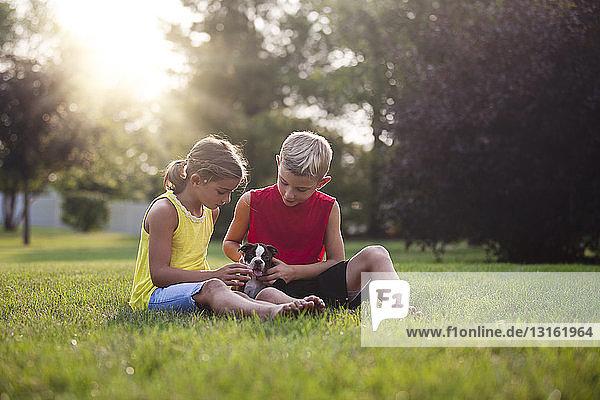 Bruder und Schwester sitzen auf Gras und schauen nach unten und streicheln Boston-Terrier-Welpen