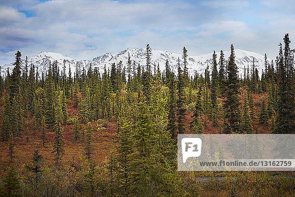 Alaska,Amerika,Ansicht,Attraktivität,Aufsicht,Außenaufnahme