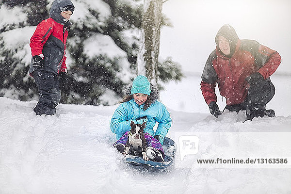 Father  son and daughter sledging with Boston terrier puppy on snow covered hill smiling