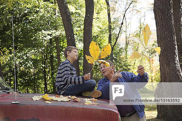 Älterer Mann zeigt Enkel Herbstblätter in Wäldern