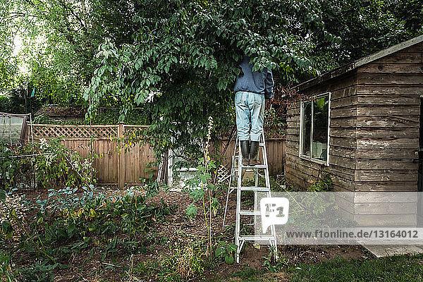 Man on ladder in tree