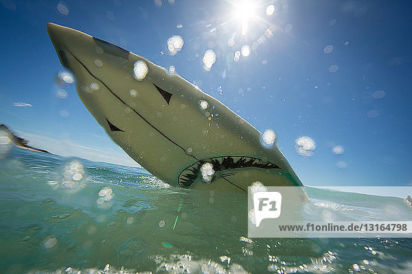 Low angle view of shark surfboard splashing on ocean  Los Angeles  USA