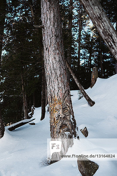 Close up of tree trunks in snow covered forest