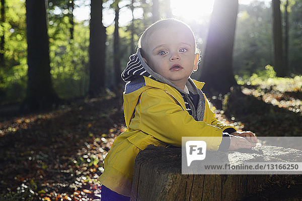 Portrait of male toddler leaning against tree stump