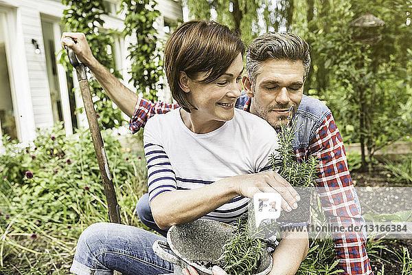Ehepaar gärtnert  Frau hält Pflanze