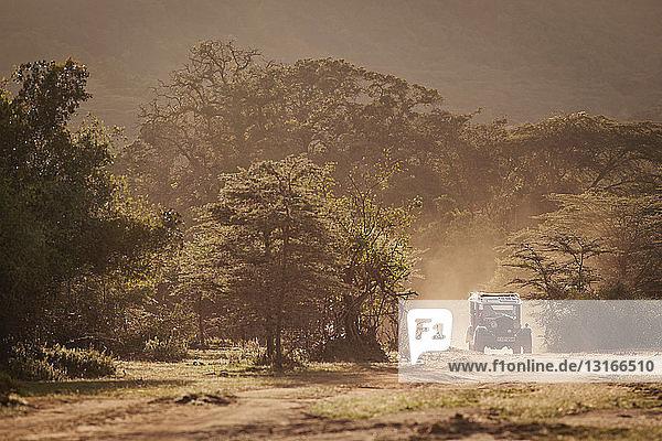 An old replica safari vehicle drives through Cottars Conservancy in Kenya
