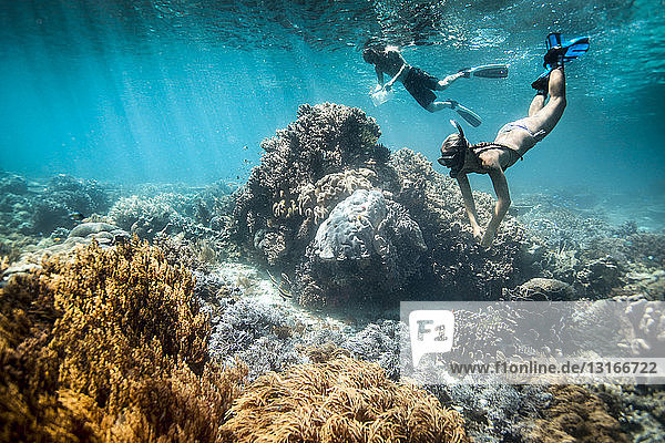 Two snorkelers perform scientific surveys on coral reef and fish  Raja Ampat  West Papua  Indonesia