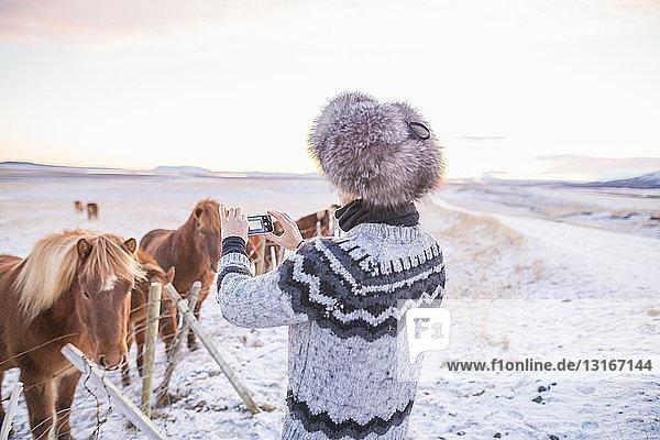 Frau fotografiert Ponys auf schneebedecktem Feld  Island