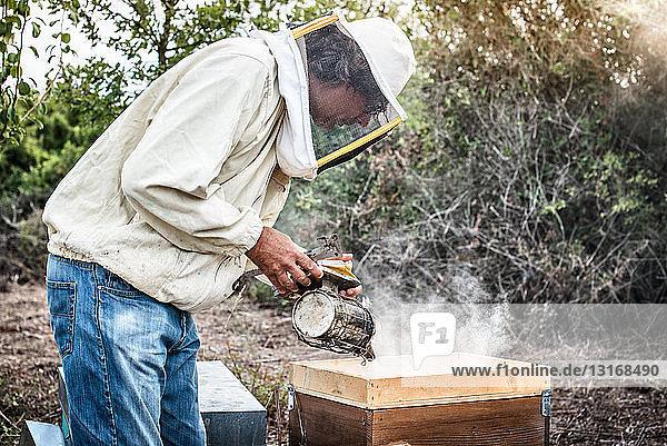 Imker raucht Bienen im Bienenstock