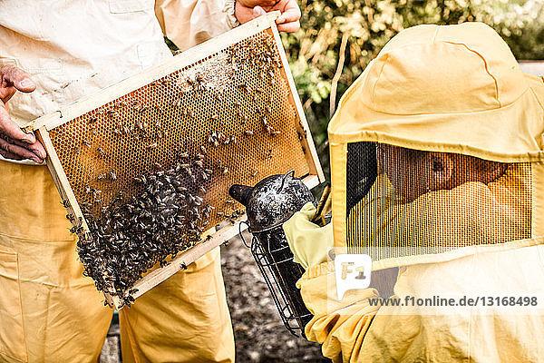 Junge Junge im Imkerkleid mit Bienenrauchraucher