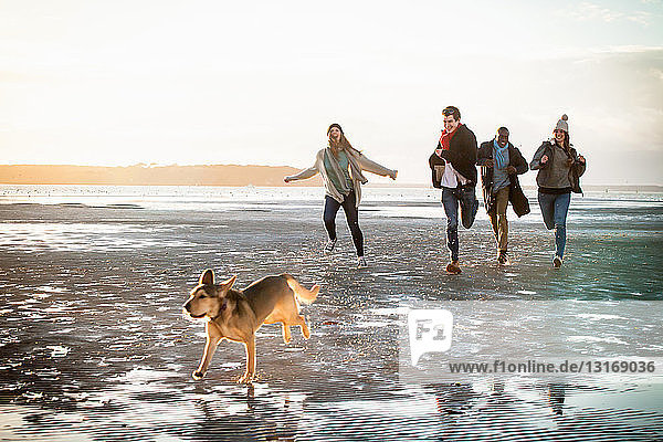 Erwachsene Freunde rennen mit Haushund am Strand