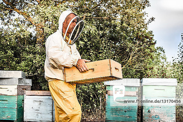 Male beekeeper working with hives