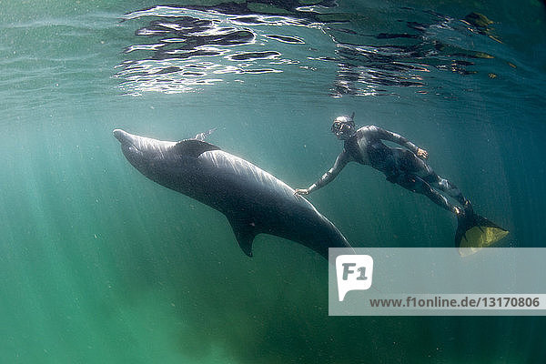 Freediver and Bottlenose dolphin