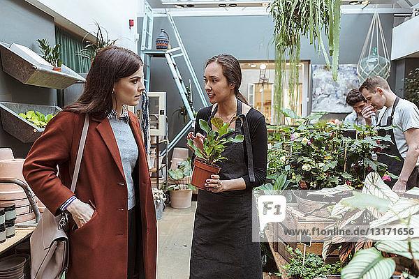 Männliche und weibliche Besitzer zeigen Topfpflanzen den Kunden im Geschäft