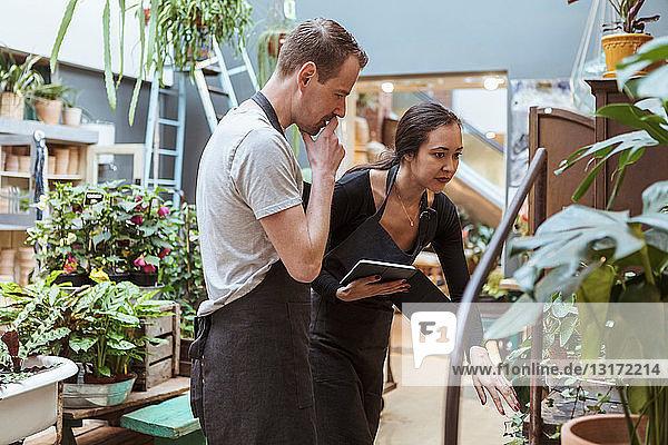 Weibliche Besitzerin mit digitalem Tablett bespricht Pflanzen mit männlichem Partner im Geschäft