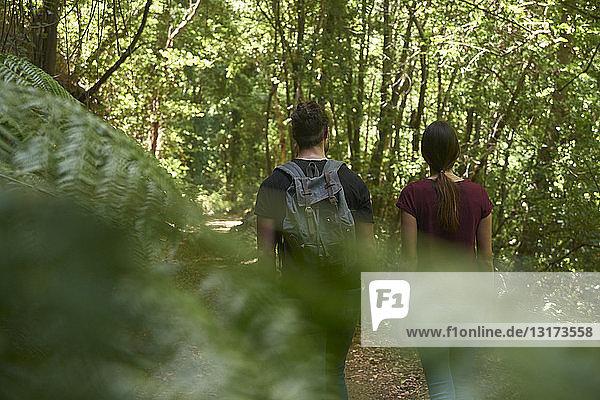 Spanien  Kanarische Inseln  La Palma  Rückansicht eines Paares  das durch einen Wald geht