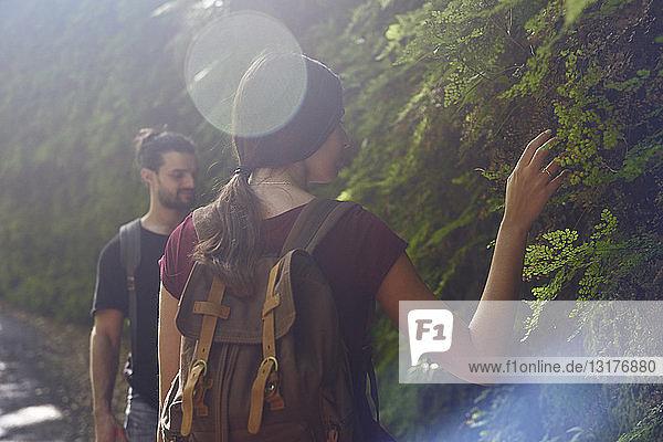 Spanien  Kanarische Inseln  La Palma  Paar wandert in einem Wald und berührt Pflanzen