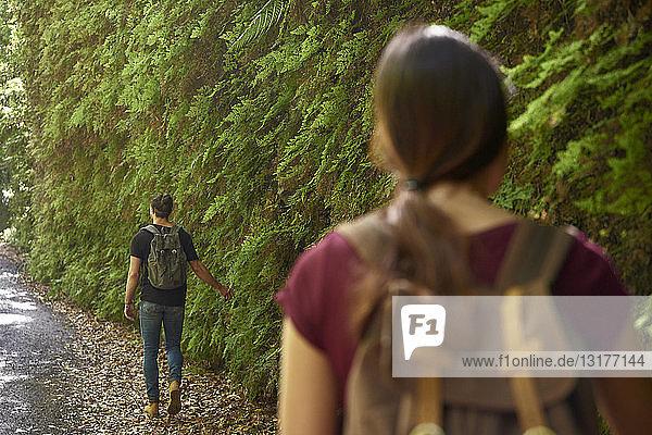 Spanien  Kanarische Inseln  La Palma  ein Paar geht in einem Wald an üppigen grünen Farnen vorbei
