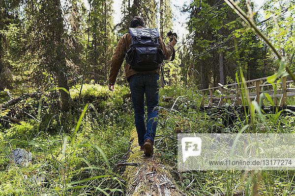 Finnland  Lappland  Mann geht auf Baumstämmen im Wald