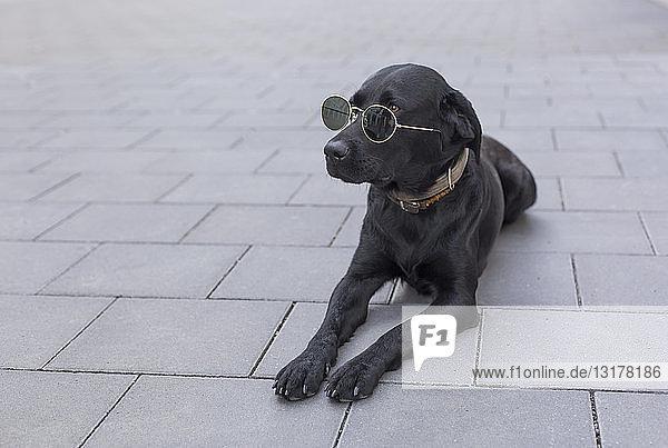 Schwarzer Hund mit Sonnenbrille auf dem Gehsteig liegend