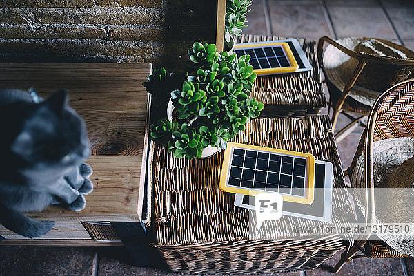 Russisch-blaue Katze neben einem Solarpanel-Ladegerät  Tablette und Pflanze Russisch-blaue Katze neben einem Solarpanel-Ladegerät, Tablette und Pflanze