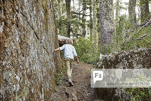 Chile  Puren  Nahuelbuta National Park  boy passing boulder in an Araucaria forest
