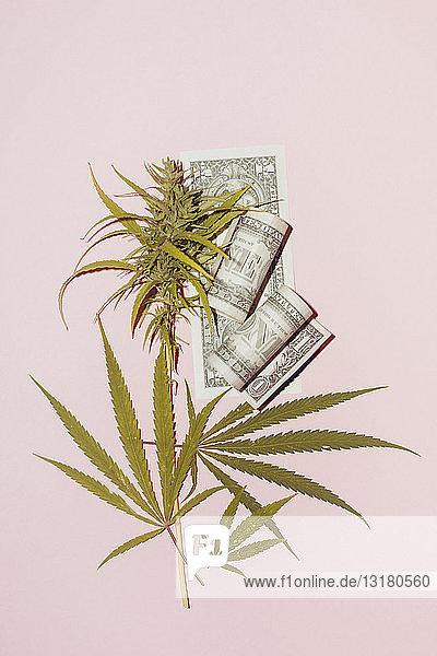 Cannabis leaf on pink background. concept for illegal drug market