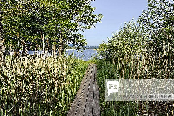 Boardwalk at lake Staffelsee  Upper Bavaria  Germany