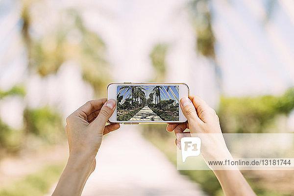 Spanien  Valencia  Ciudad de las Artes y de Las Ciencias  L'Umbracle  Frau macht Handyfoto im Palmengarten