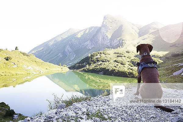 Österreich  Südtirol  Hund auf Aussichtspunkt sitzend