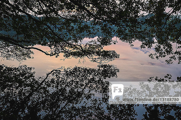 Idyllic silhouetted tree reflection in placid lake at sunset  Luetjensee  Schleswig-Holstein  German