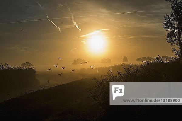 Sunrise over idyllic  tranquil farmland