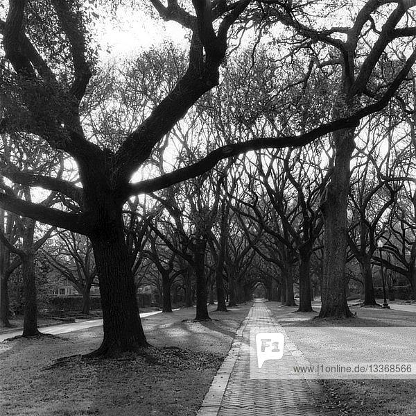 Mit Bäumen gesäumter Fußweg
