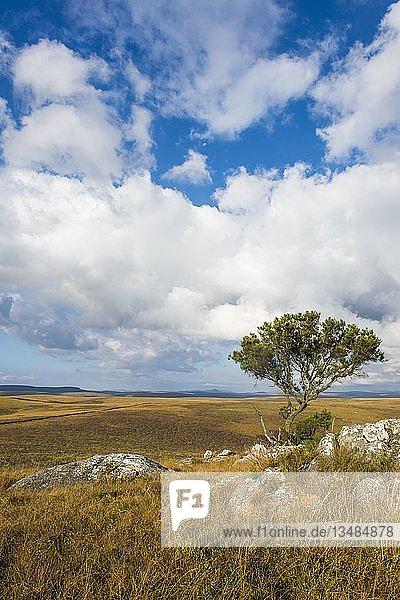 Blick über das Hochland des Nyika Nationalparks  Malawi  Afrika