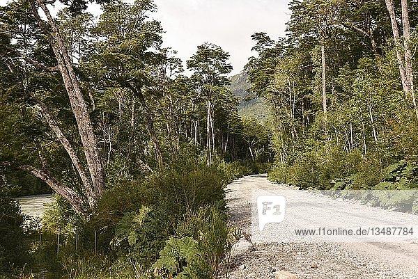 Schotterpiste in gemäßigten Regenwald  bei Puerto Río Tranquilo  Carretera Austral  Valle Exploradores  Laguna San Rafael National Park  Patagonien  Chile  Südamerika