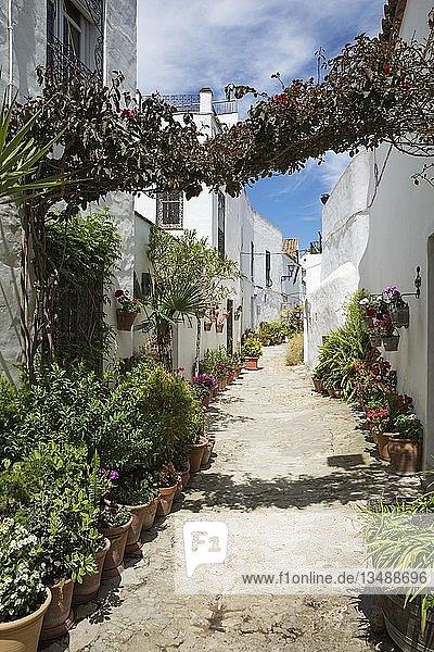 Durchgang mit Blumentöpfen zwischen weißen Häusern im Bergort Vejer de la Frontera  Cadiz-Provinz  Andalusien  Spanien  Europa