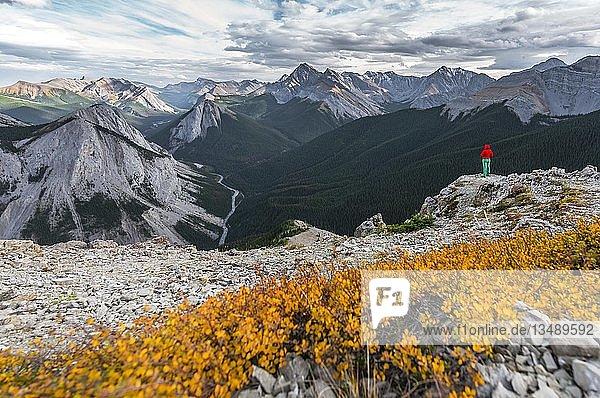 Wanderin auf Gipfel am Sulphur Skyline Trail  blickt über Berglandschaft und Flusstal  Panoramablick  Nikassin Range  Jasper National Park  British Columbia  Kanada  Nordamerika