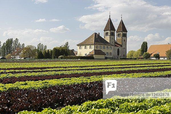 Kirche St. Peter und Paul  Salatanbau  Insel Reichenau  Bodensee  Baden-Württemberg  Deutschland  Europa