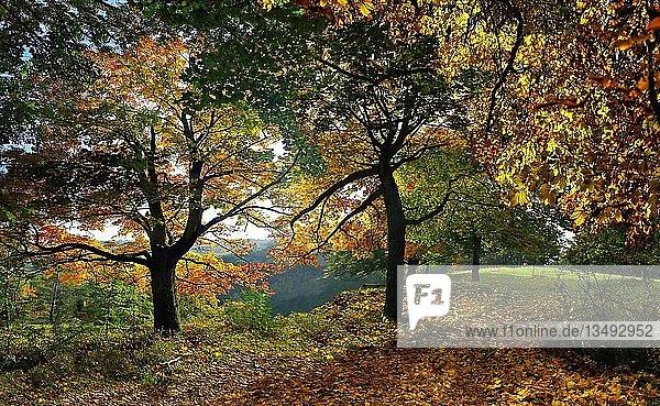 Weg mit bunten herbstlichen Laubbäumen bei Eichstätt  Bayern  Deutschland  Europa