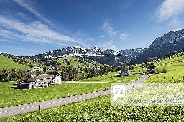 Grüne Weideflächen im Appenzellerland  hinten schneebedeckte Appenzeller Alpen  Kanton Appenzell-Innerrhoden  Schweiz  Europa