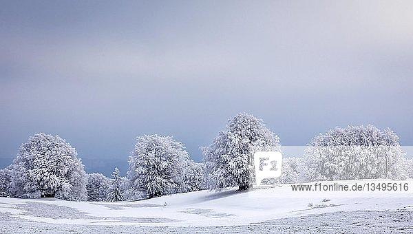 Winterlandschaft mit gefrorenen Bäumen  Mont Salève  Archamps  Frankreich  Europa
