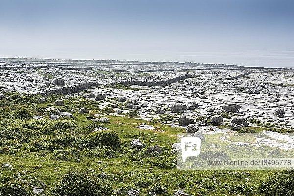 Burren-Karstlandschaft  Ballyvaughan  County Clare  Republik Irland