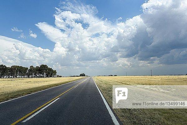 Lange gerade Straße durch die Pampa bis zum Horizont  Bahia Blanca  Patagonien  Argentinien  Südamerika