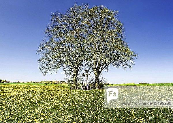 Mutter mit Tochter unter zwei Lindenbäumen und Wegkreuz sitzend auf einer Bank inmitten einer Löwenzahnwiese bei Erkertshofen  Kreis Eichstätt  Bayern  Deutschland  Europa