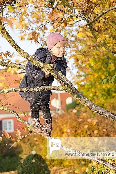 Kleinkind beim Klettern auf einen Baum im Herbst  Deutschland  Europa
