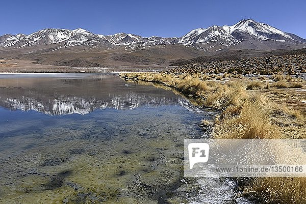 Laguna Cañapa  Hochanden  Altiplano  Potosi  Uyuni  Bolivien  Südamerika