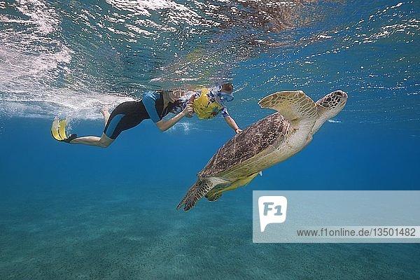 Frau und kleiner Junge mit Maske und Flossen schwimmen mit Suppenschildkröte (Chelonia mydas) unter der Wasseroberfläche  Rotes Meer  Abu Dabab  Marsa Alam  Ägypten  Afrika