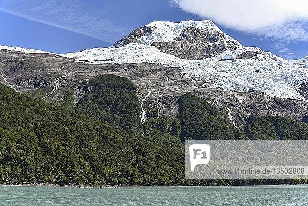 Gletscher mit Wald im Nationalpark Parque Nacional Los Glaciares  Argentinien  Patagonien  Südamerika