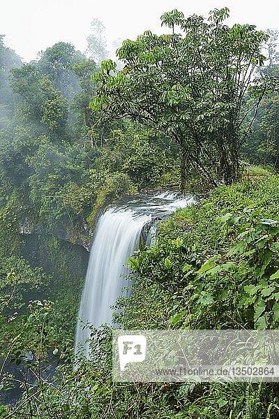 Zillie Falls im Regenwald,  Queensland,  Australien,  Ozeanien