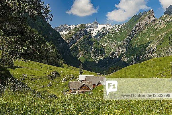 Almhütte auf sommerlicher Bergwiese im Hintergrund Säntis Gipfel  Wasserauen  Appenzell  Schweiz  Europa